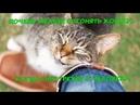 ПОЧЕМУ НЕЛЬЗЯ ОТГОНЯТЬ КОШКУ, КОГДА ОНА ТРЕТСЯ О ЧЕЛОВЕКА Cat rubs against man
