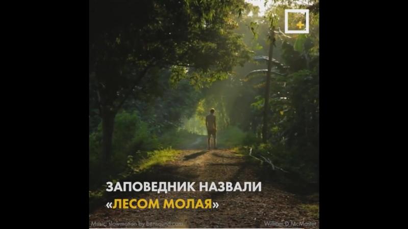 37 лет труда как один человек вырастил огромный лес