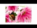 Осенний конкурс от магазина Ленты_шибори_shibori_SPb-ФАЙНДЕР 🌾🌻🌺🍂🌿🌹🍀🌼🌼🍀🌹🌿🍂🌺🌻🌾 Брошь-заколка Хризантема.
