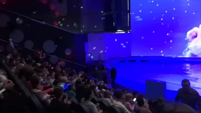 Океанариум Екатеринбурга 2018 г 1