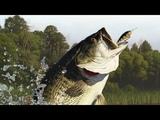Russian fishing 4 - озеро Комариное