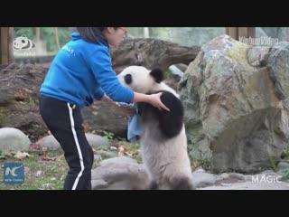 Потанцуем? Панда приглашает!