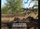 Высадили сибирские ели
