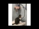 V-s.mobiПриколы с котами с ОЗВУЧКОЙ – Смешные коты и кошки – ТЕСТ НА ПСИХИКУ - Domi Show.mp4