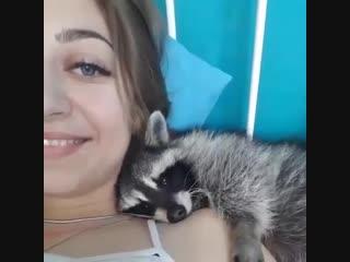 Любовь, как она есть – милейшее видео о чувствах животных