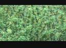 Майская гроза.