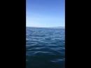Рыбалка на Камчатке невод2018
