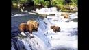 Голавль Медведи и Водопад в Польше