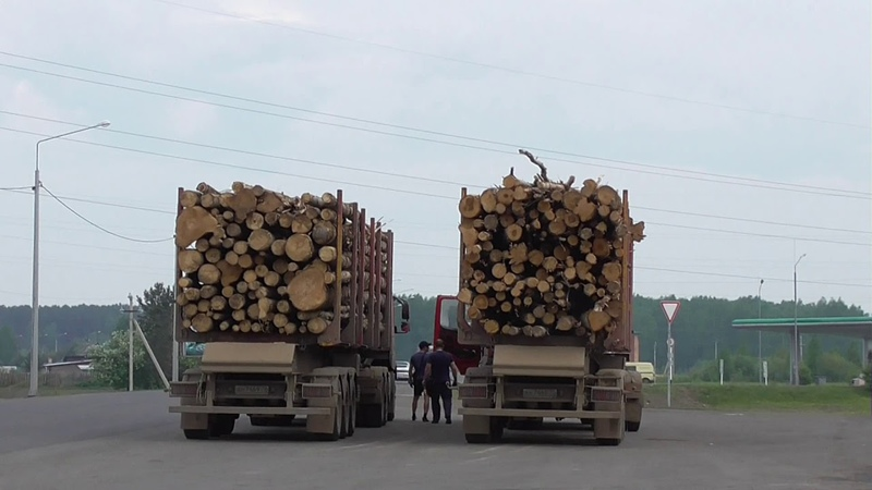 Сказ о том как вывозят из нашей страны природные ресурсы в Китай сырьё лес пиловочник