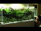 Feeding the Aquascaper 1200 Nature Aquarium