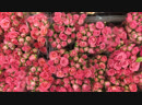 Разыграем букет из 19 🌹Среди подписчиков(bakery и flowers)и сделавших репост🤟Итоги завтра вечером