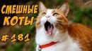 ГОВОРЯЩИЕ КОТЫ ДО СЛЁЗ - Коты Разговаривают- Я РЖАЛ ПОЛ ЧАСА