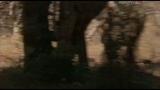 Маленькое чудо: Карликовый мангуст / Little Wonder. The Mini Mongoose (2003)