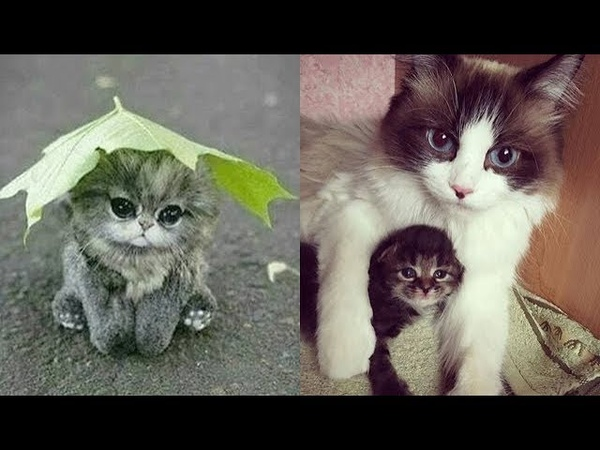 Cute baby animals Videos Compilation cute moment of the animals - Soo Cute! 17