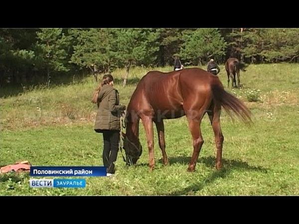 Школьников и студентов познакомили с профессией коневода