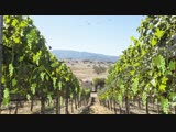 Two Wolves Wine Bring the vineyard to life