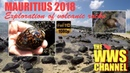 Live Cowrie Shells in low tide pools volcanic rocks Mauritius 2018