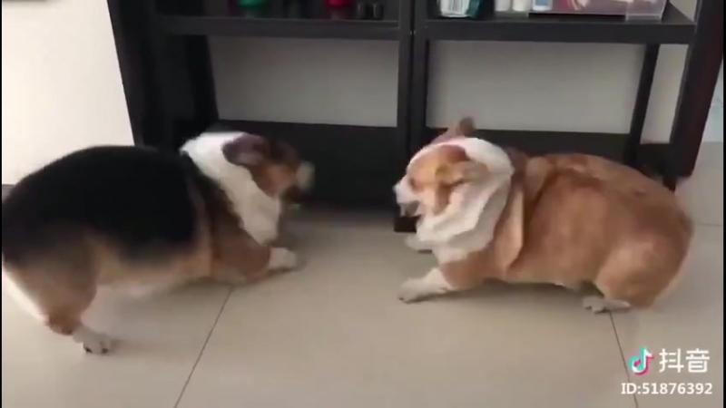 Мохнатые буханки ссорятся 2