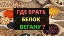 ГДЕ БРАТЬ БЕЛОК ВЕГАНУ 🍀СУТОЧНАЯ НОРМА БЕЛКА 🙈 ПИЩЕВОЙ ЛЕЙКОЦИТОЗ