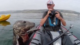 Playful seal tries to climb aboard kayak