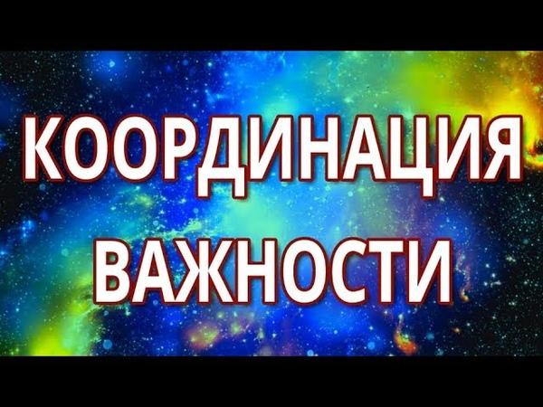 Координация важности - Вадим Зеланд