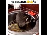 Мама и животных нагрузит домашней работой
