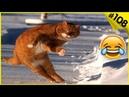 Смешные кошки приколы про кошек и котов 2017 108 ТОП подборка с кошками