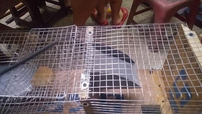Bẫy chuột thông minh (tập 1: Làm bẫy)