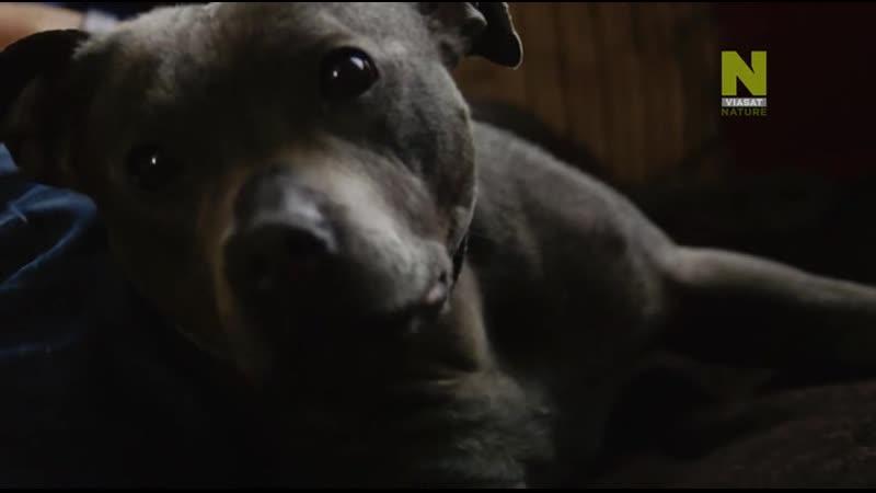 Секретная жизнь собак Dogs Their Secret Lives 2015 4