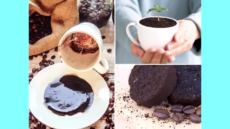 1 чайную Ложечку Сахара равномерно Насыпаем на Поверхность земли перед поливом