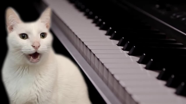 Cats Sing Beethoven Fur Elise Cats Parody