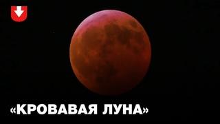 Полное лунное затмение и Суперлуние 2019 года. Удивительные кадры