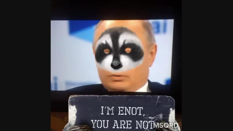Путин енот