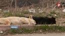 Куда пропадают собаки после отлова с улиц городов Вологодчины