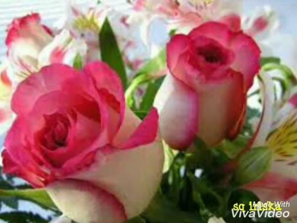 Картинки цветы,красивая музыка,из вива видео(2)