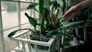 "Orquídeas Com Amor on Instagram: ""Cattlleya florescendo, INCRIVEL 🤩🤩 . Se quiser aprender a cuidar de orquídeas da forma correta, basta ler a descr..."