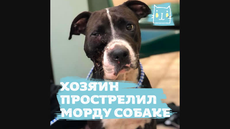 Хозяин выстрелил в собаку, потому что не хотел идти к ветеринару