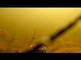 Реакция рыбы на КАКАО! Подводная съемка (2)