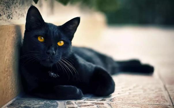 Кошка — одно из самых магических животных на земле. Аура ее настолько велика, что охватывает не только конкретного человека, но и его семью, дом и территорию, которую кошка считает своей. Поэтому нужно понимать, что когда кошка трется о ваши ноги, то она