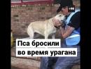 Спасатели нашли брошенного пса после урагана «Флоренс»