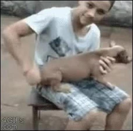 WHOA PALE DOGY BAM BALAM