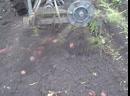 картофелекопалка Ваисова в действии