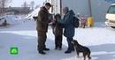 Сахалинский школьник тратит на бездомных животных все заработанные творчеством деньги