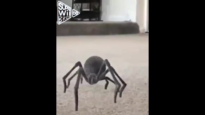 Oooh Shit a Spider Dance based on @lightskinmontes spider video