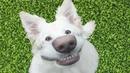 ТОП СМЕШНЫХ ПРИКОЛОВ С КОТАМИ, СОБАКАМИ И ДРУГИМИ ЖИВОТНЫМИ/Смешные кошки – Funny Cats/FUNNY PETS 1