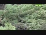 Ягдтерьер-беcстрашный охотник Шокирующее видео