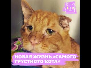 Новая жизнь «самого грустного кота»