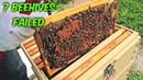 7 Beehives Failed Beekeeping Vlog
