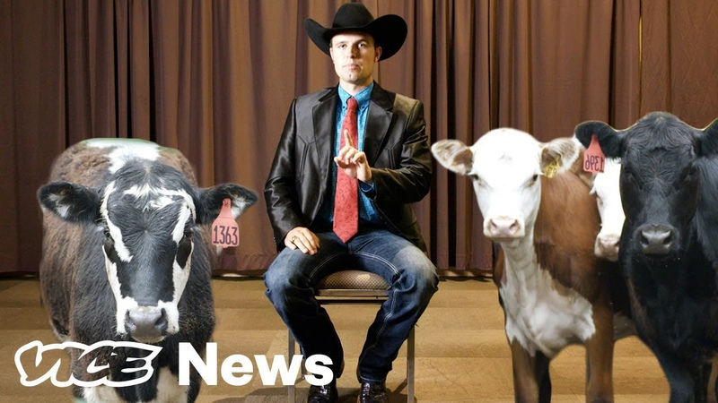 What The Hell Are Livestock Auctioneers Actually Saying