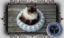 DIY 😻 Fleece Bettchen für Katzen Hunde | Handmade Cat Bed